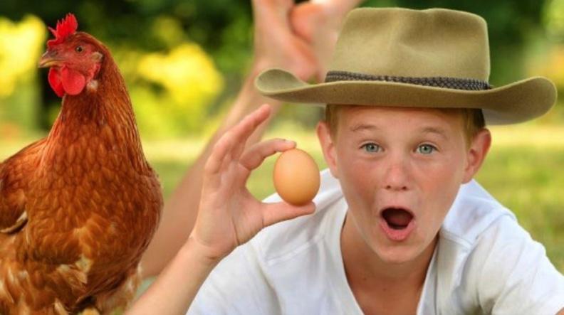 Маленький фермер из Австралии очень знаменит. Яйца от его несушек пользуются успехом