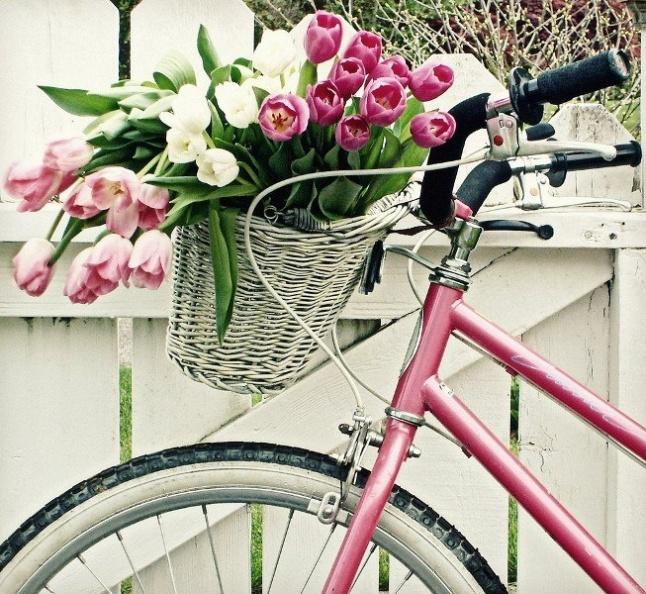 цветы и велосипед, что может быть лучше?