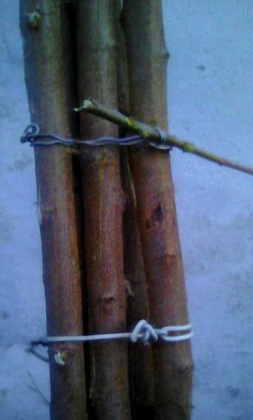 стягивание проволокой жердей (корневой поросли) тутовника для выравнивания и медленной сушки на держаки для сельхоз инструмента