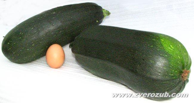 Цуккини - нежный темно-зеленый итальянский сорт кабачка, популярный среди сыроедов. Куриное яйцо среднего размера в кадре для масштаба