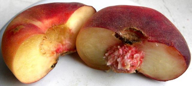 ферганский плоский инжирный персик, существуют сорта южнорусской, крымской и украинской селекции