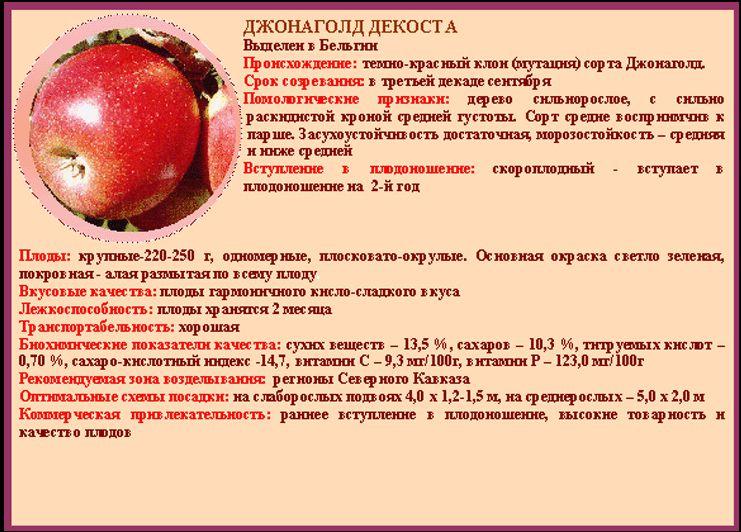 яблоко сорта Декоста - инфографика