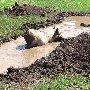 Свинья грязи найдет и с нею будет здорова и чиста